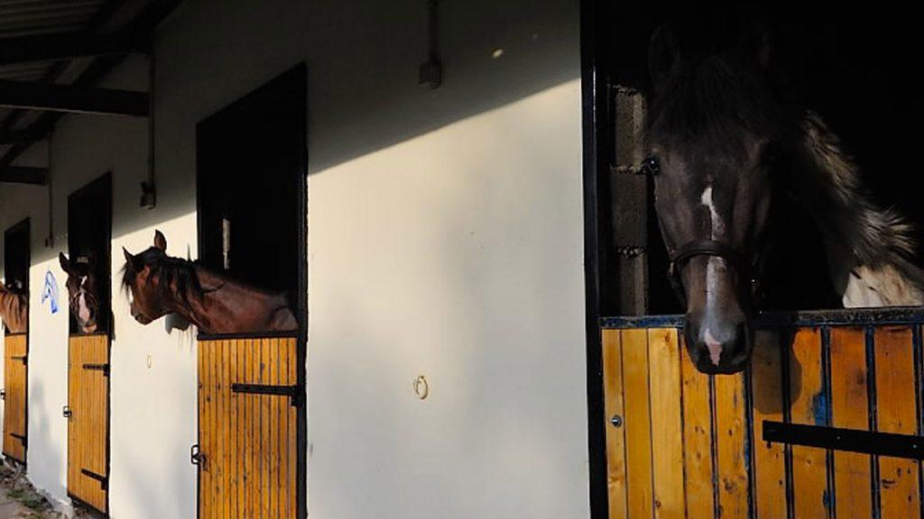 Pension pour chevaux à Quimper