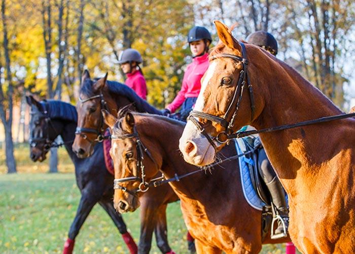 Stage équitation à Quimper